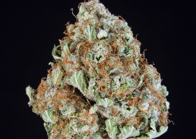 TCS Plushberry ($36.00/3.5G, $11.00/G) (I/S – 80/20)