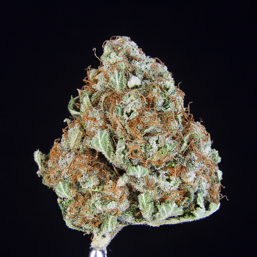 ***TCS Plushberry*** ($11.00/G, Grams Only!!!) (I/S – 80/20)
