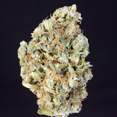 TCS Old Mother Ghani***($12.00/G)