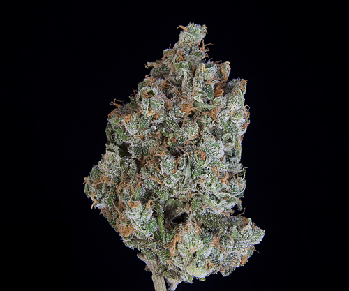 TCS Space Bomb #1  ($36.00/3.5G, $11.00/G) (S/I – 70/30)