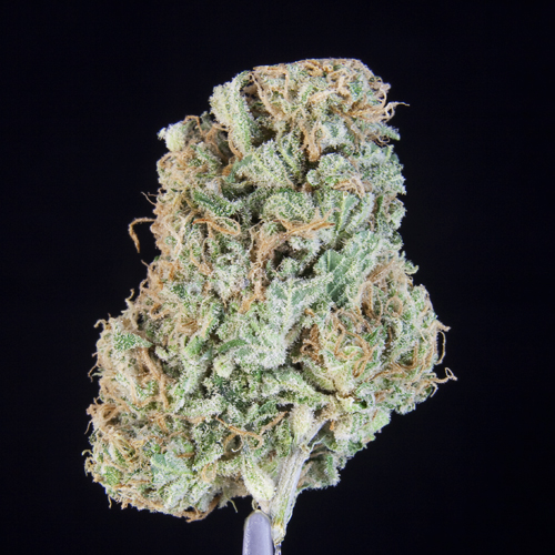 *SPECIAL PRICING* TCS Pifford  ($32.00/3.5G, $9.60/G) (I/S – 50/50)