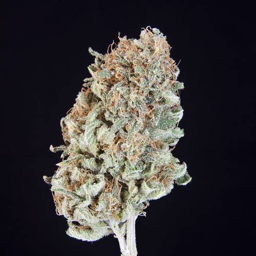 **TCS TOP SHELF**Sourlope**($55.00/3.5G, $17.00/G)(S/I – 70/30%)(THC: 26.550%  CBD: 1.361%)