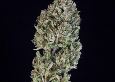 TCS Dawg Doo #3 ($40.00/3.5G, Eighths Only!!) (S/I – 60/40)