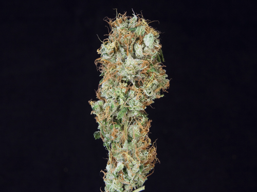 ***TCS Appalachian Super Skunk***($40.00/3.5G, Eighths Only!) (I/S – 60/40)