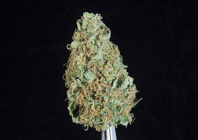 TCS Grateful Breath ($36.00/3.5G, Eighths Only!!) (I/S – 60/40)