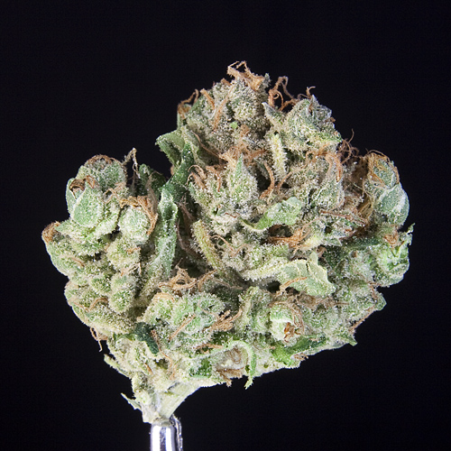 ***TCS Space Bomb #1***($36.00/3.5G, $11.00/G) (S/I – 70/30)
