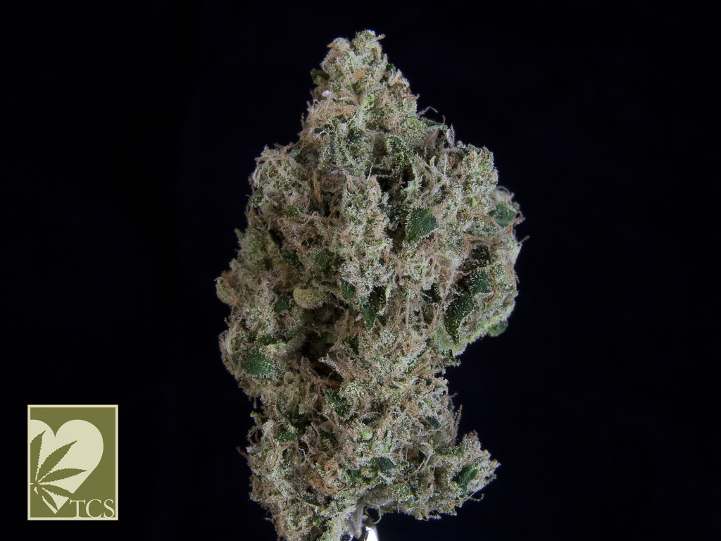 TCS TOP SHELF***American Dream*** ($55.00/3.5G, Eighths Only!) (S/I – 70/30)