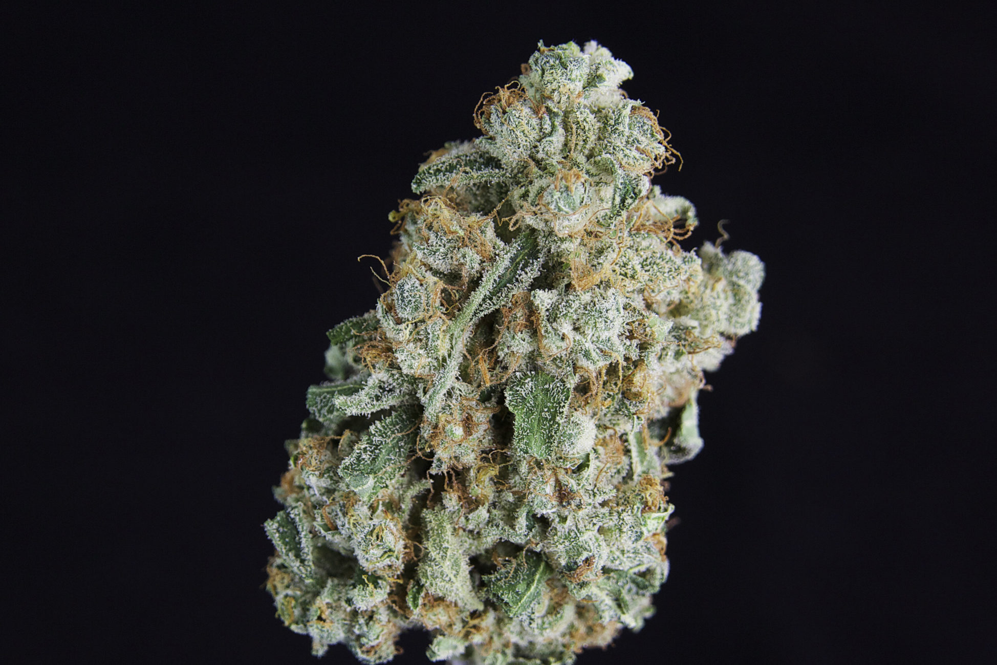***Special Pricing*** TCS Tangie #2  ($32.00/3.5, $9.60/G)