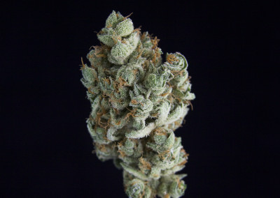 **SPECIAL PRICING**TCS Clementine ($28.00/3.5G, $8.00/G) (S/I – 70/30)