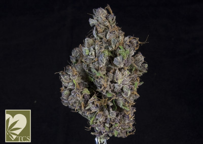 TCS Ace Of Spades #1 ($11.00/G) (I/S – 70/30)