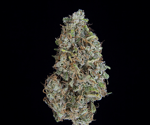 ***TCS Animal Cookies#2***($40.00/3.5G, Eighths Only!) (I/S – 60/40)